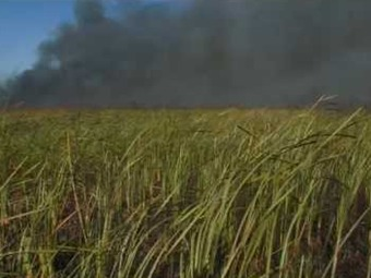 Florida: Incendio consume más de 1.200 acres en los Everglades